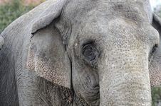 Free Elephant Royalty Free Stock Images - 27932329