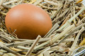 Free Egg In Nest Stock Photos - 27943083