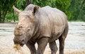 Free Rhino Royalty Free Stock Image - 27944716