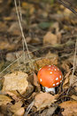 Free Red Toadstool On Forest Stock Image - 27948391