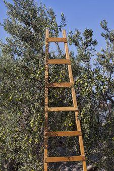 Free Olives Harvesting Stock Images - 27940804