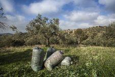 Free Olives Harvesting Stock Images - 27941454