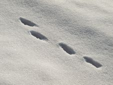 Free Hare Trail In The Snow Royalty Free Stock Photography - 27941807
