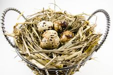 Free Bird Nest With Quail Eggs In Basket Stock Image - 27943051