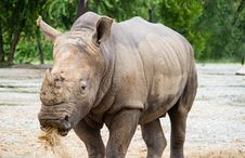 Free Rhino Royalty Free Stock Image - 27944716