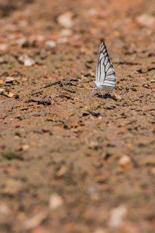 Free Beautyful Butterfly Stock Photo - 27949150