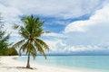 Free Green Tree On A White Sand Beach Royalty Free Stock Photos - 27953628