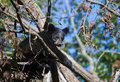 Free Black Bear Cub Royalty Free Stock Photos - 27955728