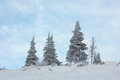 Free Snow-covered Trees Royalty Free Stock Photography - 27959147