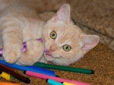 Free Red Kitten Royalty Free Stock Photo - 27950295