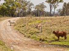 Australian Rural Country Road Scene Stock Photography