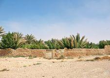 Free Oasis In Desert Royalty Free Stock Photos - 27955918