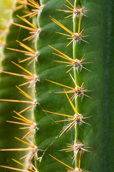 Free Green Cactus Plant Stock Images - 27956334