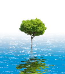 Tree In Water Royalty Free Stock Photo