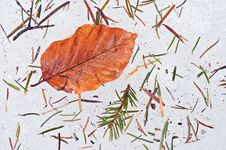 Autumn Leaf On Ice Stock Images