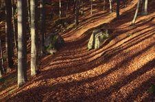 Free Autumn Forest Royalty Free Stock Photos - 27959128