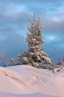 Free Tree And Snowdrift Stock Photo - 27959130