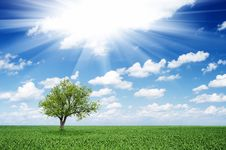 Free Tree In A Field Royalty Free Stock Image - 27959136