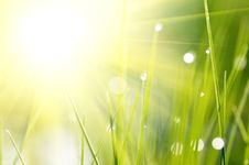 Free Background With Grass Royalty Free Stock Photos - 27959138