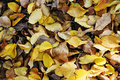 Free Autumn Or Fall Leaves Royalty Free Stock Photo - 27962225