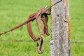 Free Fencepost Stock Photography - 27969782