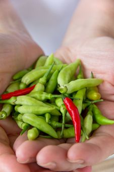 Free Chili Pepper Royalty Free Stock Images - 27961669