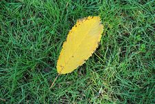 Free Yellow Autumn Leaf On Green Grass Royalty Free Stock Images - 27962629