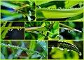 Free Raindrop On Leaf Stock Image - 27973071
