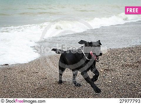Free Playing Dog Stock Photos - 27977793