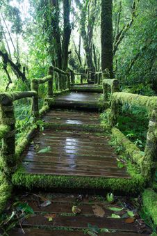 Free Green Wooden Walkway In Rain Forest Royalty Free Stock Photos - 27970368