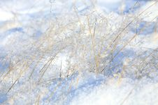 Free Grass With Ice Royalty Free Stock Images - 27972969