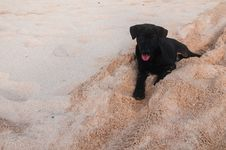Free Puppy On A Beach Stock Images - 27976094