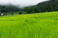 Free Green Terraced Rice Field Stock Image - 27982341
