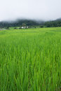 Free Green Terraced Rice Field In Chiang Mai, Thailand Royalty Free Stock Photos - 27982398