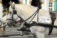 Free Horse Stock Image - 27993981
