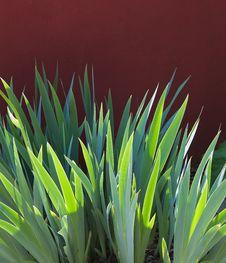 Free Garden Detail Royalty Free Stock Image - 27998026