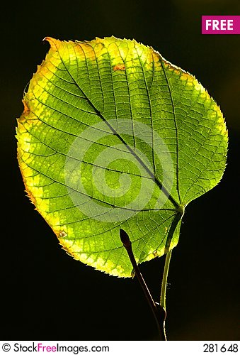 Free Leaf Touched By A Frost Royalty Free Stock Photos - 281648