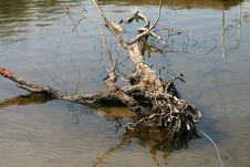 Free Dead Tree In River Royalty Free Stock Image - 280356