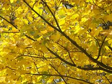 Free Autumn Abstract Stock Image - 280841