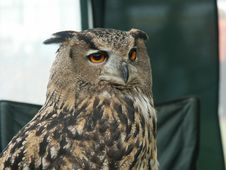 Free Eagle Owl Stock Photography - 281242