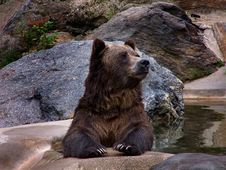 Free Grizzly Bear Stock Photos - 283423