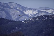 Free Birds Stock Photography - 283922