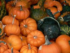 Free Jack-O-Lanterns Waiting To Happen Royalty Free Stock Photography - 284057