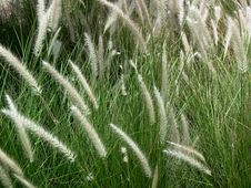 Free Grass Stock Photography - 285322