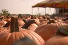 Free Pumpkins For Sale 6 Royalty Free Stock Image - 287496