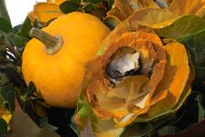 Free Autumn Pumkin Stock Photos - 287823