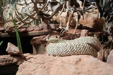 Free Snake Stock Photo - 288020