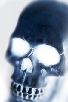 The Skull Stock Photography