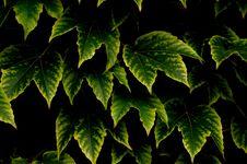 Free Leaf_1 Stock Images - 288334