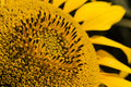 Free Sunflower-close-up Stock Photos - 2801973